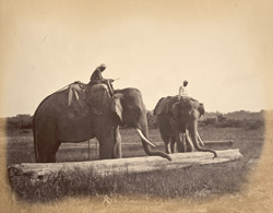 Elephants moving timber [in Burma].